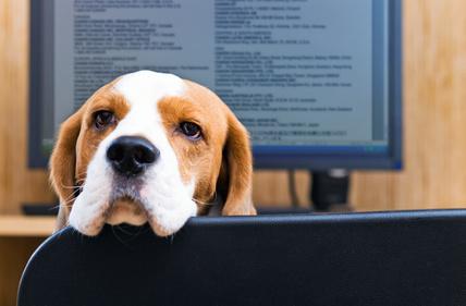 Pourquoi faut-il emmener votre chien au bureau ?